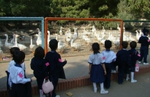 Learning Excursion Trip to Zoological Garden